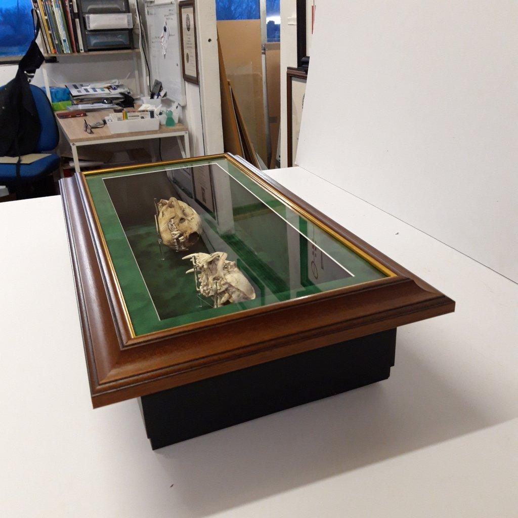 3D Framing Skulls